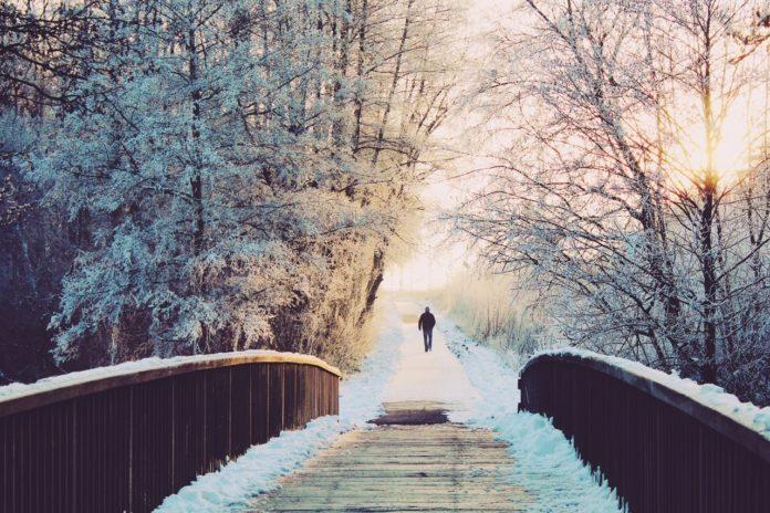 Gåtur igennem vinter skov over bro